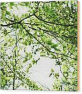 Green Leaves Wood Print by Blink Images