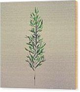 Green Leaves Wood Print by John Krakora