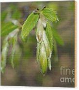 Green Leaves Wood Print