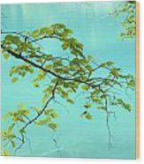 Green Leaves Over Blue Water Wood Print