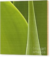 Green Leaves Series  1 Wood Print