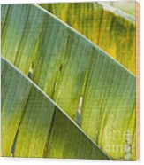 Green Leaves Series 14 Wood Print