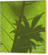 Green Leaves Series 3 Wood Print