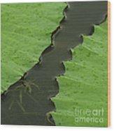 Green Leaves Series  4 Wood Print