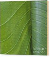 Green Leaves Series  6 Wood Print