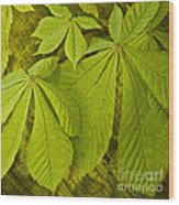 Green Leaves Series Wood Print by Heiko Koehrer-Wagner