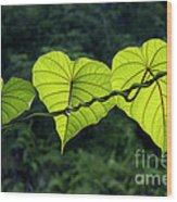 Green Leaves Wood Print by William Voon