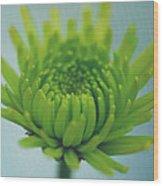 Green Light Wood Print