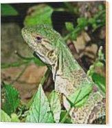 Green Lizard Close-up Wood Print