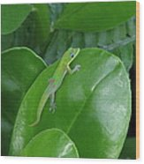 Green Lizard Wood Print