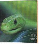 Green Mamba 2 Wood Print