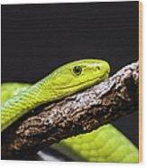 Green Mamba - Mamba Verte - Grüne Mamba Wood Print