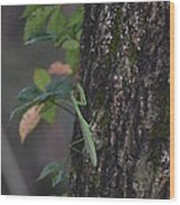 Green Mantis Wood Print