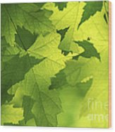 Green Maple Leaves Wood Print by Elena Elisseeva