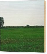 Green Meadow Wood Print