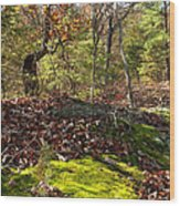 Green Moss By The Road Wood Print