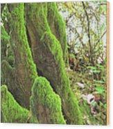 Green Moss Wood Print