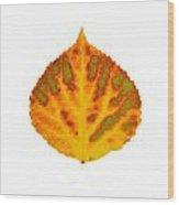 Green Orange Red And Yellow Aspen Leaf 1 Wood Print