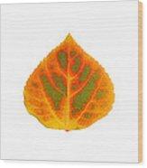 Green Orange Red And Yellow Aspen Leaf 5 Wood Print