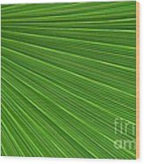 Green Palm Abstract Wood Print