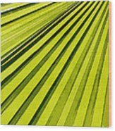 Green Palm Frond Wood Print