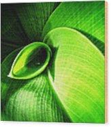 Green Paradise - Leaves By Sharon Cummings Wood Print
