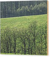 Green Peace Wood Print by Davorin Mance