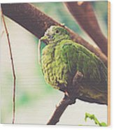 Green Pigeon Wood Print