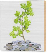 Green Plant And Money  Wood Print