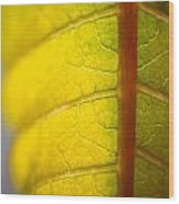Green Poinsettia Leaf Wood Print