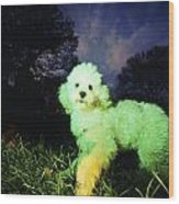 Green Poodle Wood Print
