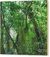 Green Rain Forest Wood Print