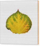 Green Red And Yellow Aspen Leaf 2 Wood Print