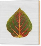 Green Red And Yellow Aspen Leaf 4 Wood Print