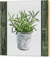 Green Rosemary Herb In Small Pot Wood Print