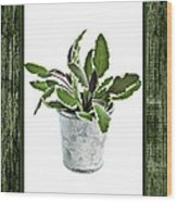 Green Sage Herb In Small Pot Wood Print by Elena Elisseeva