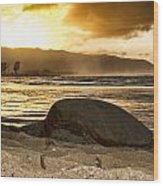 Green Sea Turtle At Sunset V2 Wood Print