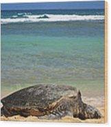 Green Sea Turtle - Kauai Wood Print