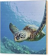 Green Sea Turtle - Maui Wood Print