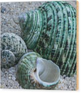 Green Seashells Wood Print