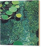 Green Shimmering Pond Wood Print