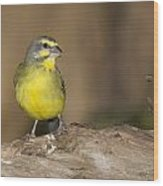 Green Singing Finch Wood Print