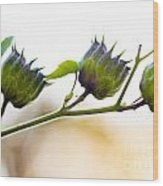 Green Spiky Wild Flowers Wood Print