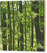 Green Spring Forest Wood Print