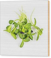 Green Sunflower Sprouts Wood Print by Elena Elisseeva