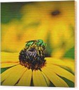 Green Sweat Bee Wood Print