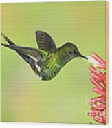 Green Thorntail Hummingbird Wood Print