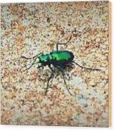 Green Tiger Beetle Wood Print