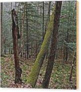 Green Timber Wood Print