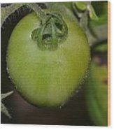 Green Tomato Wood Print by Michael Sokalski